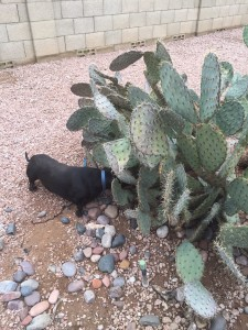 Diana's dog JJ and a prickly pear.