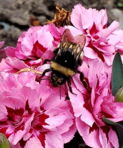 BEES-AGoodFriend-Valdemar-crop