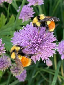 Bees-Virtues